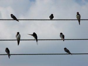 birds-300x225