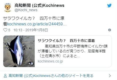 【珍しい】高知県四万十市の海岸に「サラワクイルカ」が漂着しているが見つかる…国内では発見例が少なく、世界的にも情報が少ない種類