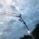 7月11日鳥の様子。山梨県