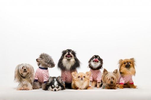 【病気】犬が新たなインフルエンザウイルスの保持者として世界的流行の原因になるかもしれない