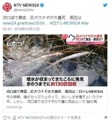 【謎】山梨県河口湖で異変あり、台風24号通過後「巨大ウナギ」が大量死…原因は不明