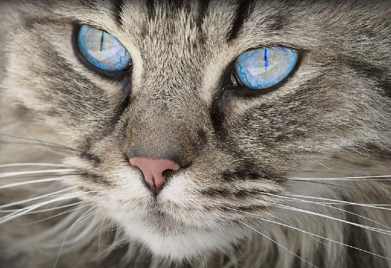 【予知夢】茨城県の郁代さんが猫の気になること~3.11の前と同じことが起きている