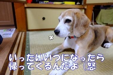 2015_0927_10594300