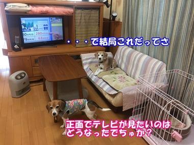 IMG_6243