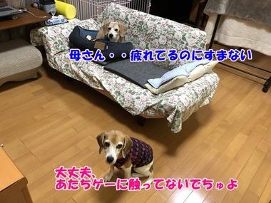 IMG_7534