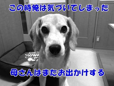 IMG_3721