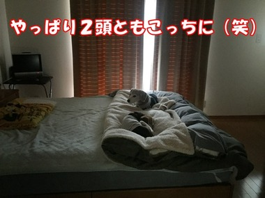 IMG_9594