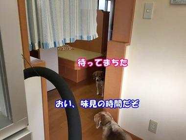 IMG_3390