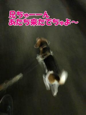 IMG_9611 (1)