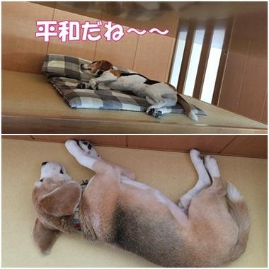 平和な寝姿