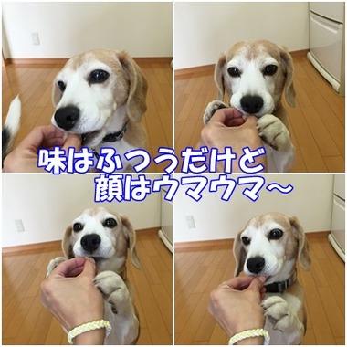 小豆ケーキガオ