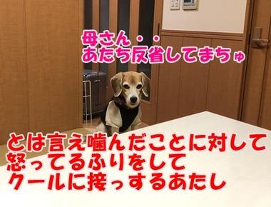 IMG_8640