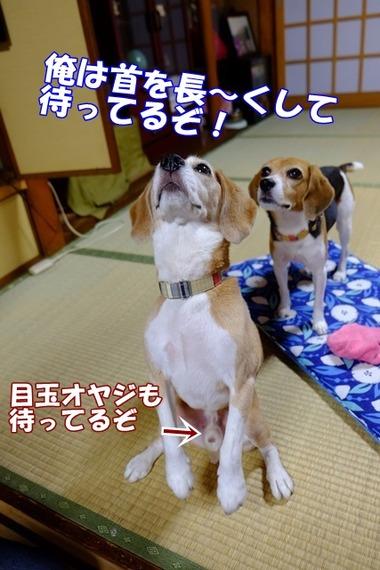 2015_0927_10573100