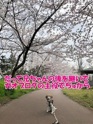 IMG_4708