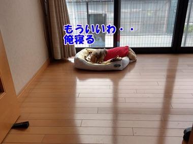 IMAG0932