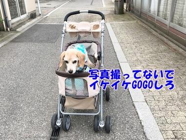 IMG_4045