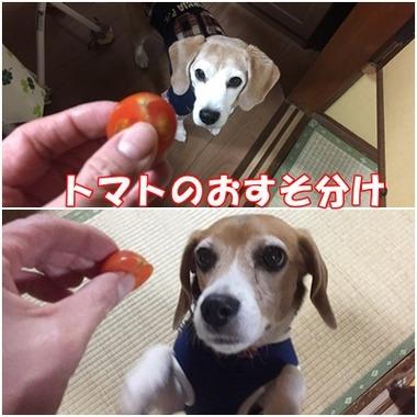 子供達はトマト
