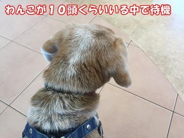 IMG_6167