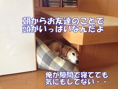 IMG_9146