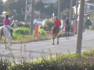 馬の散歩2