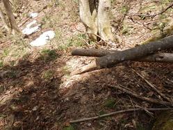 倒木処理2
