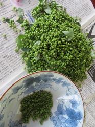 1山椒の実の下処理