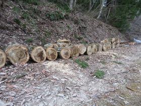 薪(楢と杉)3