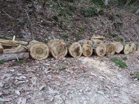 薪(楢と杉)2