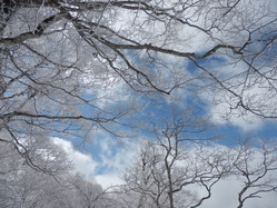 青空と霧氷