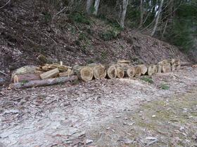薪(楢と杉)