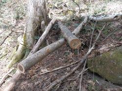 倒木処理3
