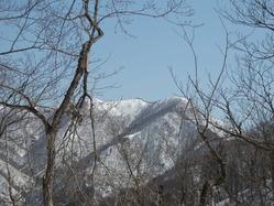 枝の間から豪士山