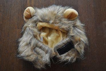 lion370