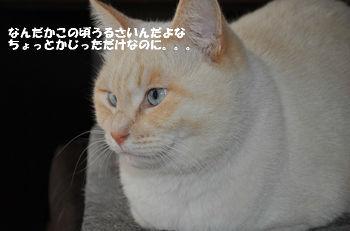 DSC_0013a