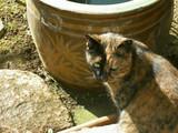 冬休み 「近所のネコ」
