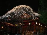 022301yushima
