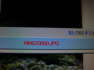 RIMG30053