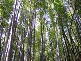 s0901hatakeyamachikurin