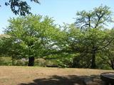 s1101nangosakura