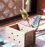 インコのピーコちゃん 止まり木