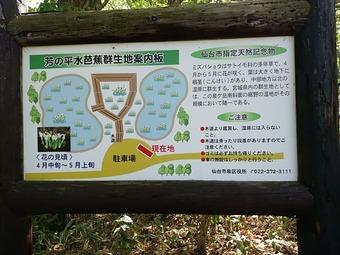 仙台市芳の平水芭蕉群生地