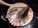 銀座 淡路島と喰らえ 鮮魚