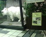 江戸川競艇 白いヤギ シロジロー 和田アキコ