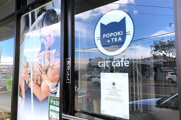 カイムキのおしゃれペットショップと猫カフェ 8