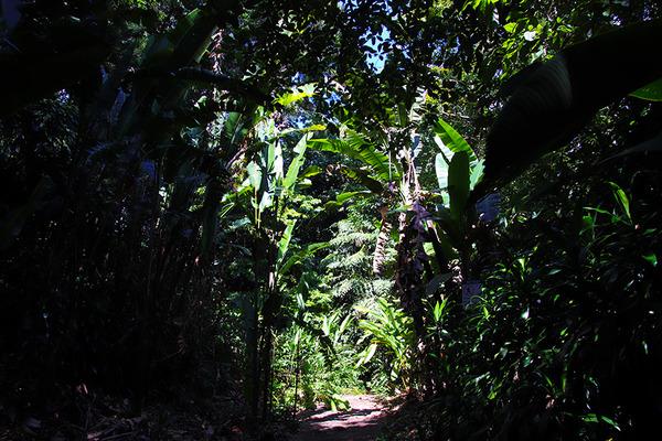 ワヒアワの町の中に広がる森 3