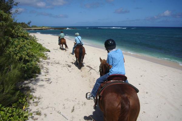 ハワイで乗馬はマストです 3