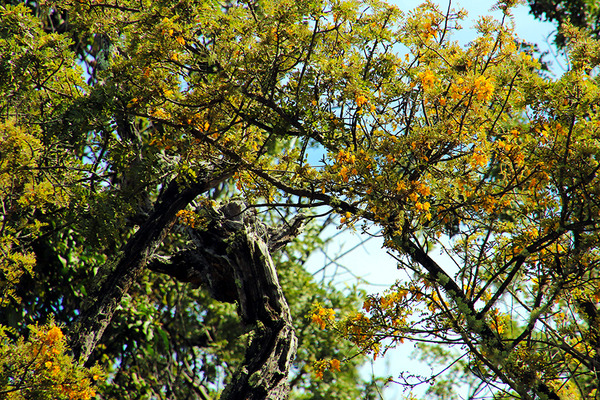 ハワイの固有種 マーマネとパリラ 6