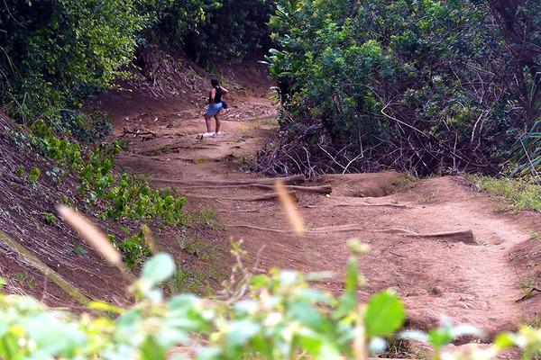 ハワイ島ポロル渓谷トレイル 7