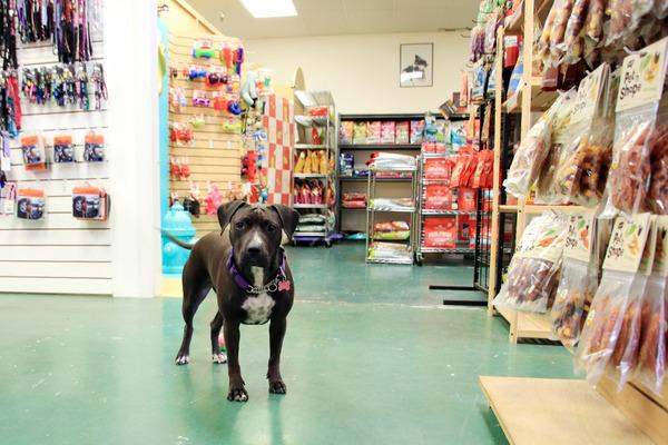 ハワイのペット用品店主にワンコ犬 8