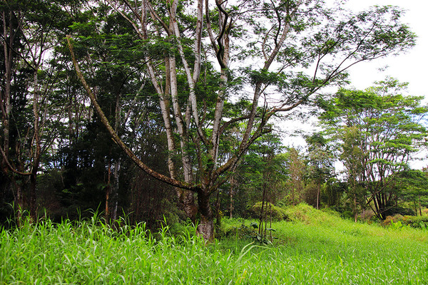puna forest 5